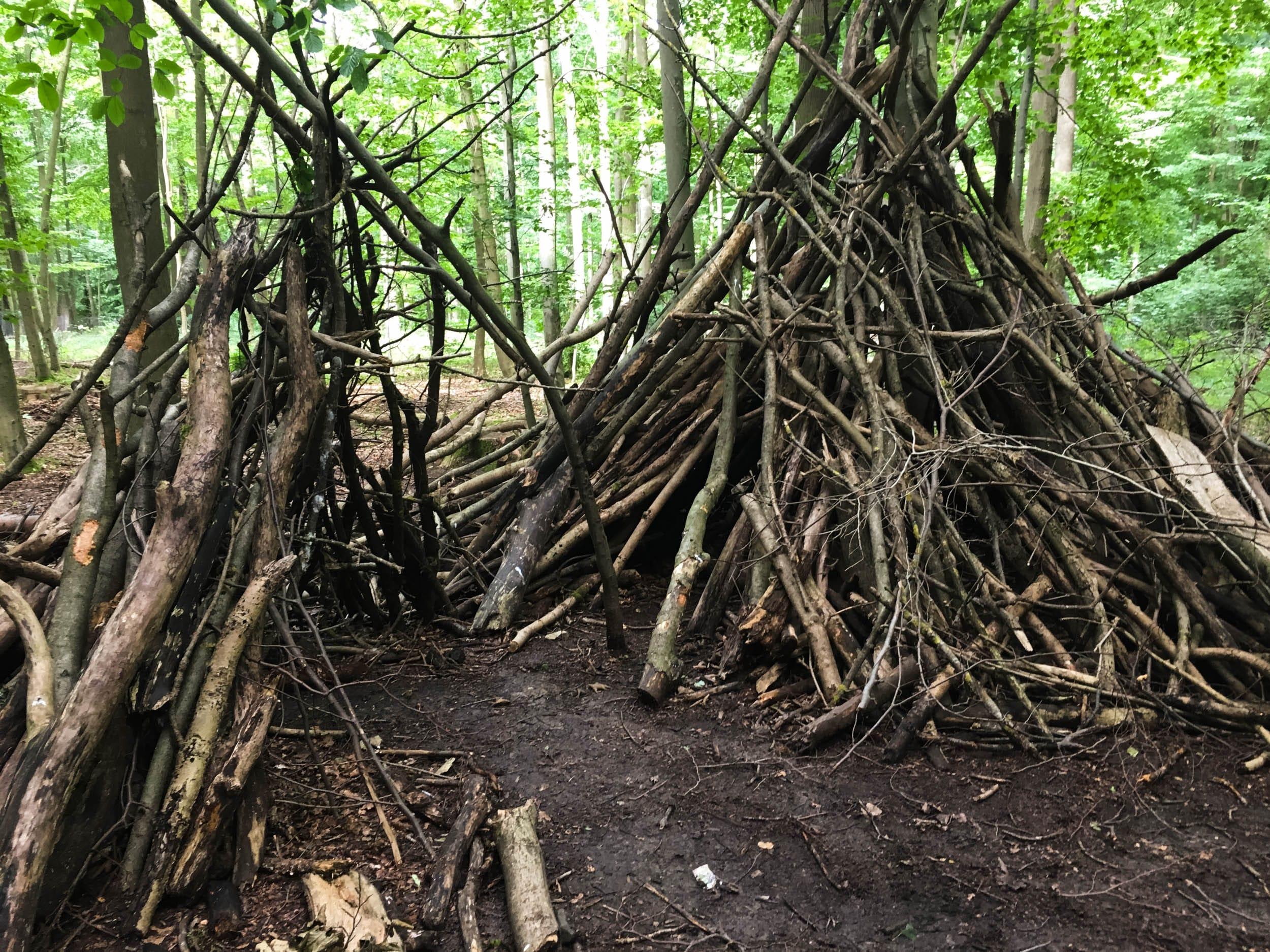 Wald | Höhle | Äste | ivy.li