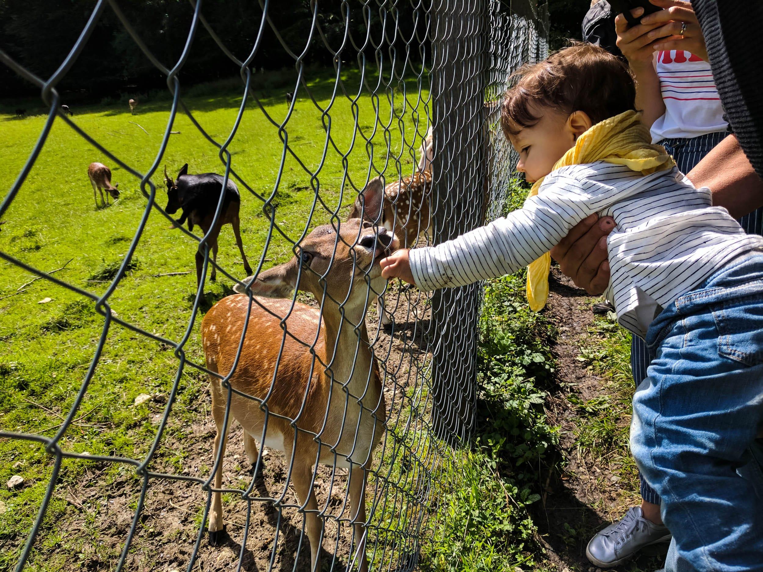 Wildgehege | Rotwild | Reh | Bambi | Kleinkind | ivy.li